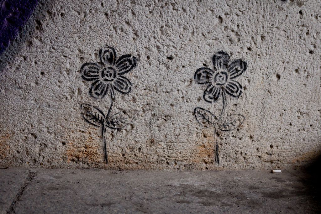 Jena: Mauerblümchen